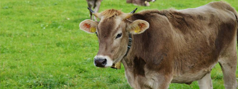 Akzo Viehsalz fein 25kg Rinder Pferde Schafe Ziegen Wild Salz Streusalz